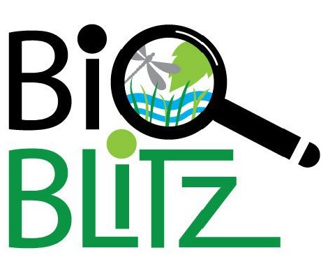 Worts Meadow Landbeach BioBlitz